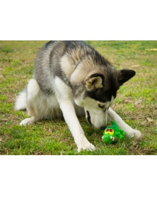 Lanco Pets - Hračka pro psy - Dentální hračka krokodýl | learningtoys.cz
