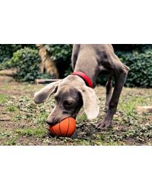 Lanco Pets - Hračka pro psy - Basketbalový míč | learningtoys.cz